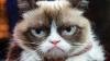 В музее мадам Тюссо впервые появится восковая фигура кошки