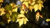 23 сентября начинается астрономическая осень
