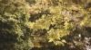 Молдавские синоптики прогнозируют засушливую осень