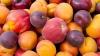 Россельхознадзор снимает запрет на ввоз фруктов с 46 молдавских предприятий