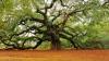 Ученые посчитали все деревья на Земле