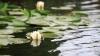 Уровень воды в чимишлийских водоемах упал до критической отметки