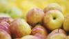 Молдавские фермеры готовятся отправить фрукты на ввоз в Россию