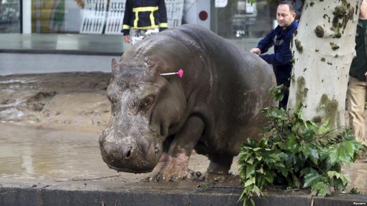 В Тбилиси возобновил работу пострадавший от наводнения зоопарк