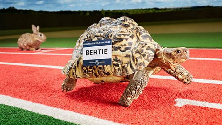 Книга рекордов Гиннесса рассказала о собаке-футболисте и черепахе-скороходе