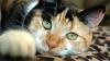 Исследователи нашли связь между кошачьей агрессией и окрасом шерсти