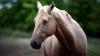 В Казахстане лошадей оснастят GPS-навигаторами