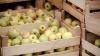 Льготный доступ молдавской продукции на рынки ЕС продлен: что это значит для страны