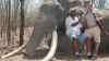 В Зимбабве убит самый большой за 30 лет слон