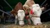 Корма для животных подорожали в полтора раза из-за засухи