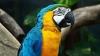 Мужчина отрезал себе уши, чтобы быть похожим на попугая (ФОТО)