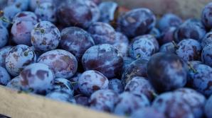 Группа российских экспертов посетит молдавские фруктовые склады
