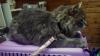 Пропавший шведский кот нашелся в 1700 км от дома