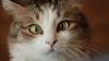 Неожиданная реакция котов на огурцы (ВИДЕО)