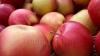 Молдова отправляет все больше яблок в Казахстан