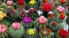 Молдавская исполнительница собрала коллекцию кактусов