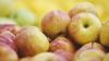 На границе с Россией задержали более 19 тонн молдавских яблок