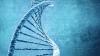 Финские ученые нашли ген дебоширства в пьяном виде