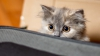 Ветеринары попросили интернет-пользователей прекратить пугать котов огурцами (ВИДЕО)