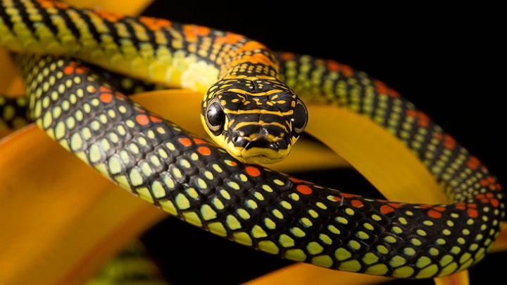 Ученые выяснили, почему у змей нет ног
