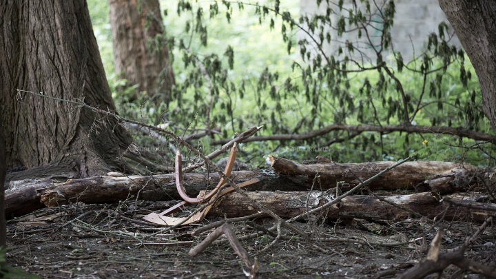 В Дубоссарах мужчина скончался, упав с дерева