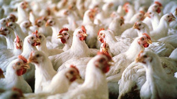 Россельхознадзор запретил ввоз куриного мяса с турецкого предприятия