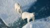 На Северном Полюсе зафиксировали необычайно высокие температуры