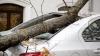 Ураган в Молдове: повалены деревья, повреждены электропровода и крыши зданий