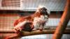 Кишиневский зоопарк подготовился к зиме (ФОТО/ВИДЕО)