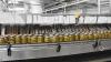 В селе Валя Маре откроется завод по производству сушеной плодоовощной продукции
