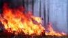 Лесной пожар в Австралии: погибли два человека