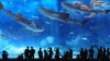 Посетители сеульского аквариума стали свидетелями каннибализма среди акул
