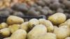 Фотографию картофелины купили за один миллион евро (ФОТО)