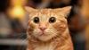 Коты реагируют на кота-робота (ВИДЕО)