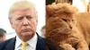 Новый хит соцсетей: коты с челкой Дональда Трампа (ФОТО)