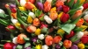 Владельцы теплиц готовы обеспечить столичные рынки цветами ко Дню влюблённых и Мэрцишору