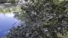 Найдены виновные в сбросе производственных отходов в реку Бык в селе Флорень