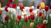 Накануне Дня святого Валентина ощутимо выросли продажи цветов