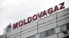 """Прокурор: В """"Молдовагаз"""" годами подделывали результаты тендеров"""