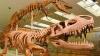 На востоке Марокко нашли большое скопление скелетов динозавров