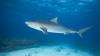 В Австралии рыбаки поймали акулу весом более 600 кг (ФОТО)