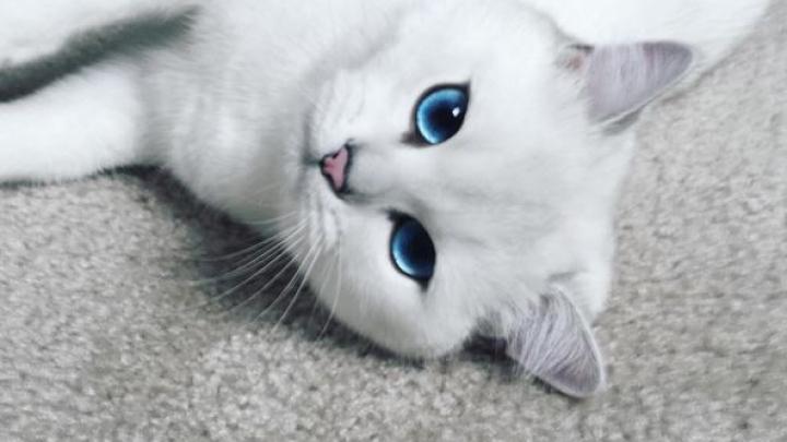 Кот с «идеальными» голубыми глазами стал звездой соцсетей (ФОТО)