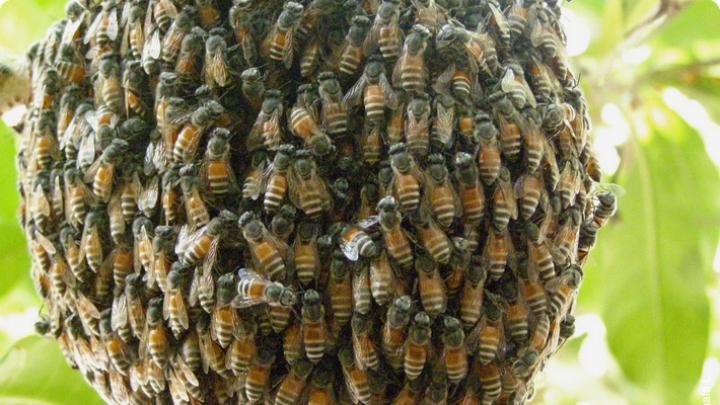 Гигантские пчелы атаковали туристов в индийском храме Солнца