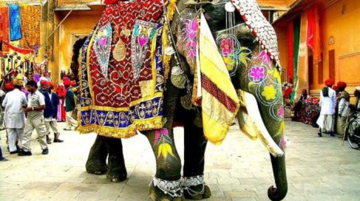 В Индии взбесившийся слон разгромил парковку (ВИДЕО)
