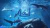 Провести романтическую ночь с акулами предлагает океанариум Парижа (ФОТО)