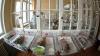 Женщина в Испании трижды пыталась похитить младенцев