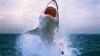 Акула напала на дайвера в Австралии