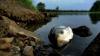 Спиртзавод Оргеевского района превратил сельское озеро в токсичную лужу