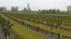 Волонтеры из Унген высадили 450 саженцев лесного ореха