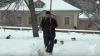 Духовные скрепы России: кошки принимают участие в Крестном ходе (ВИДЕО)